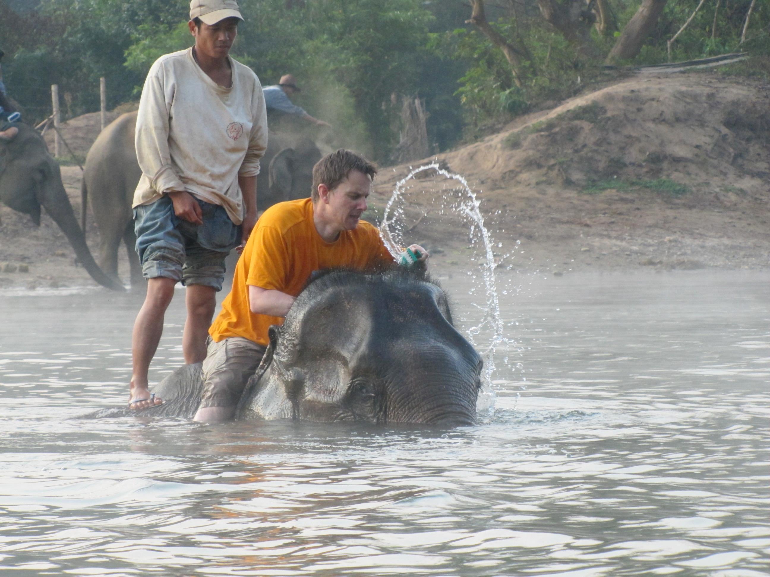 Elephant, Elephant Village, Luang Prabang, Laos