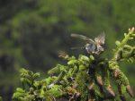 Bird of Prey, Zermatt, Switzerland